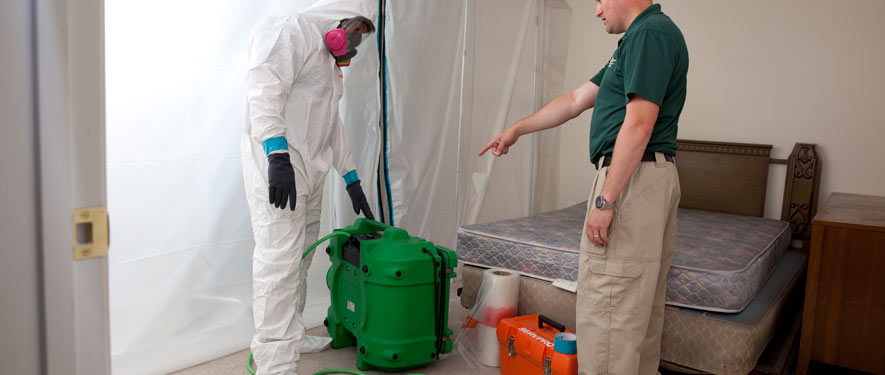 Bloomington, IL mold removal process